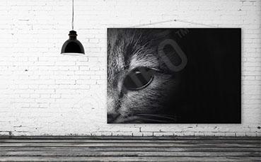 Obraz kot w czerni i bieli