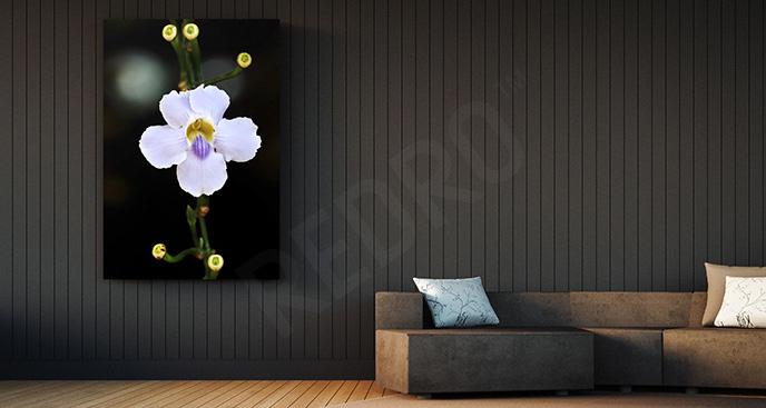 Obraz kwiat na czarnym tle