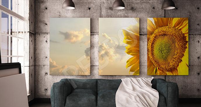 Obraz kwiat słonecznika