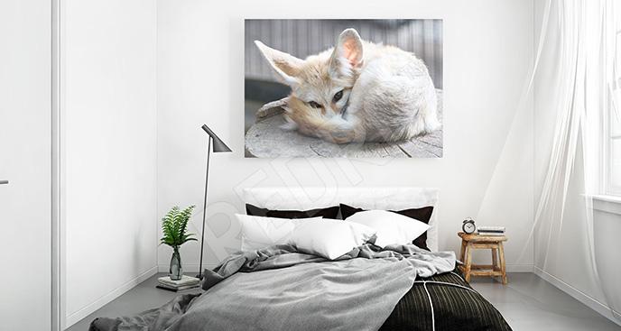 Obraz lis pustynny do sypialni