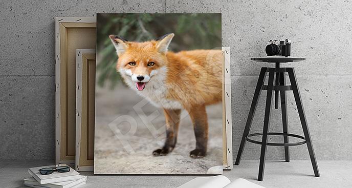 Obraz lis w naturze