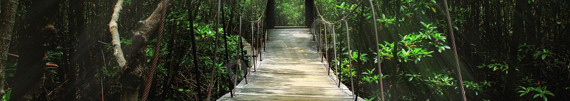 Obraz most linowy w lesie