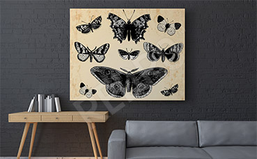 Obraz motyle nocne