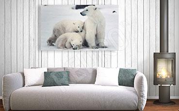 Obraz niedźwiedzie polarne