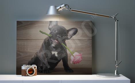 Obraz pies z kwiatkiem