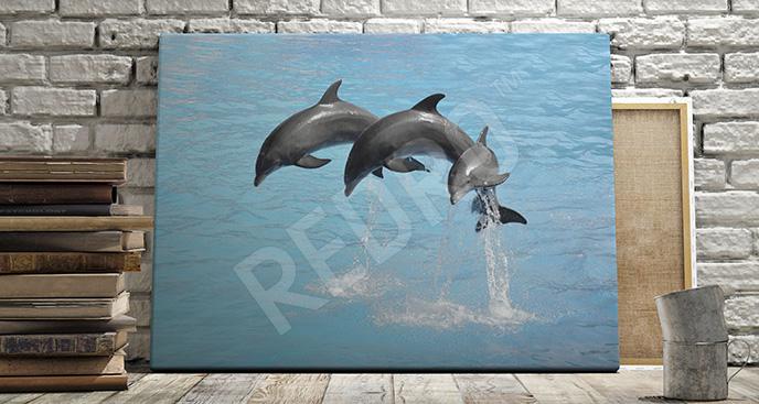 Obraz pokaz delfinów