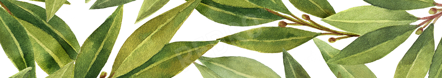 Obraz przyprawy - liście laurowe