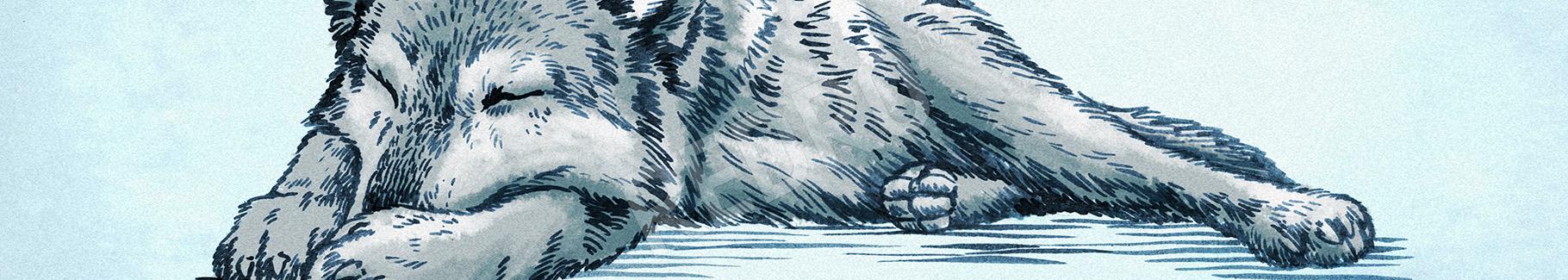 Obraz rysunek wilka