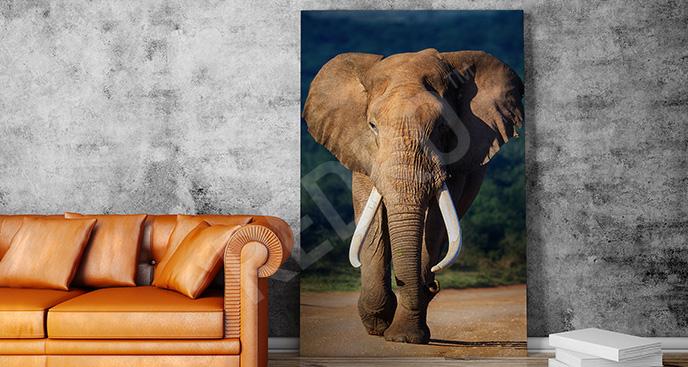Obraz słoń 3D