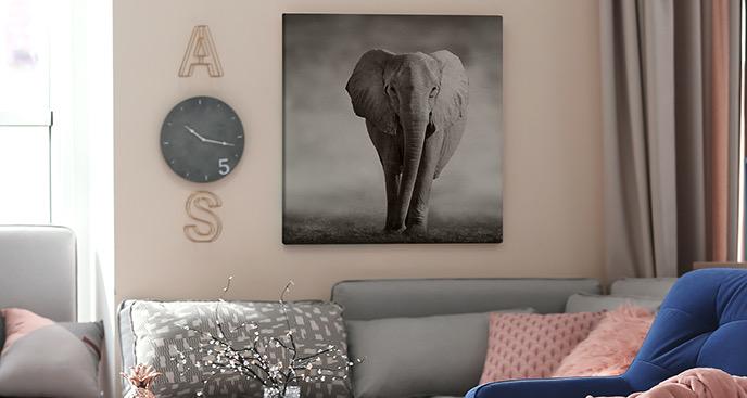 Obraz słoń na sawannie