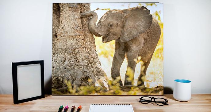 Obraz słoń przy drzewie