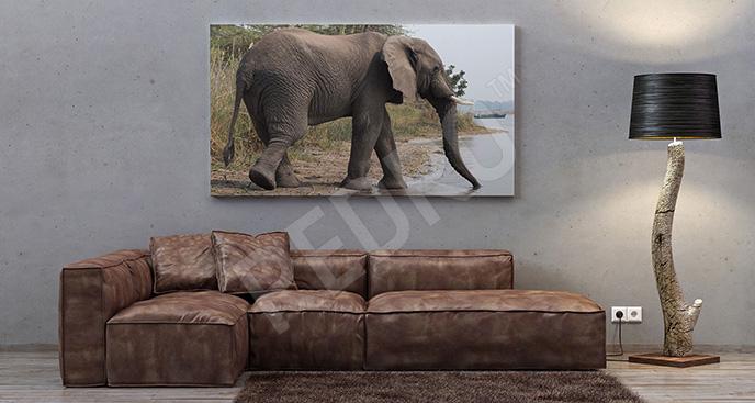 Obraz słoń przy wodopoju