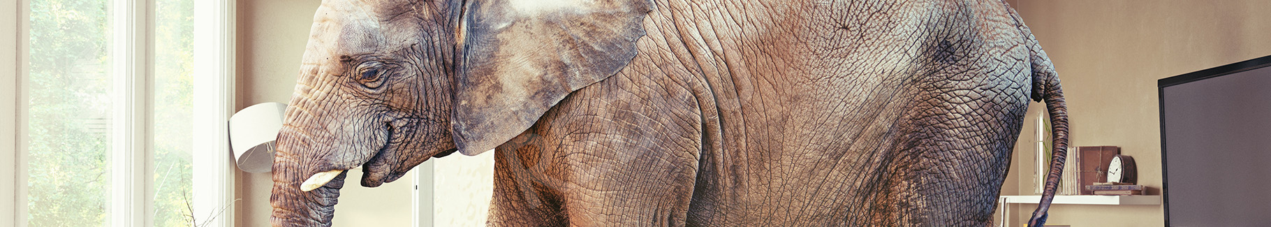 Obraz słoń w salonie