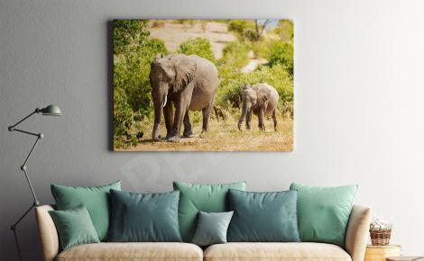 Obraz słoniątka w parku narodowym