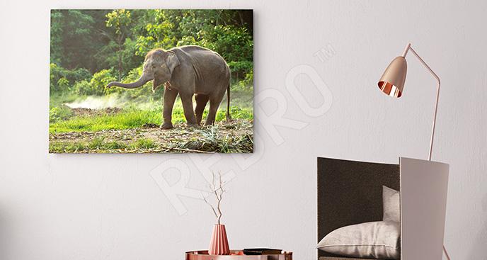Obraz słoniątko wśród drzew