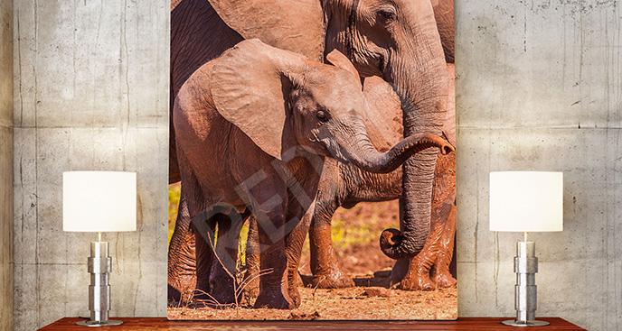 Obraz słonie do przedpokoju