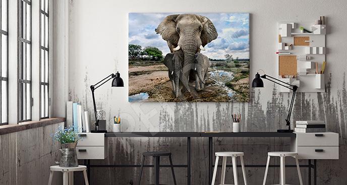Obraz słonie do salonu