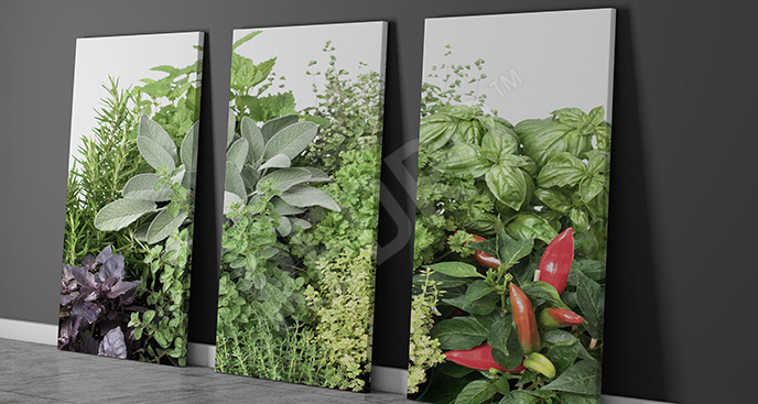Obraz świeże zioła