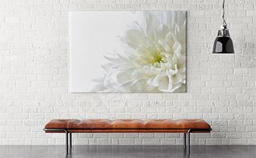 Obraz z białym kwiatem