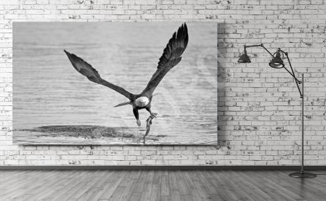 Obraz z ptakiem do salonu