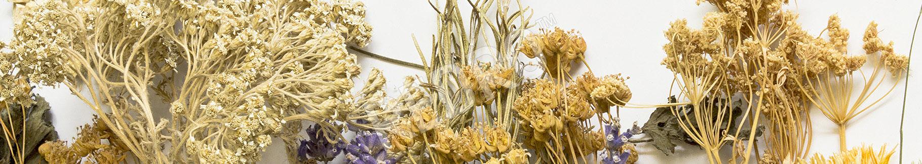Obraz suszone zioła