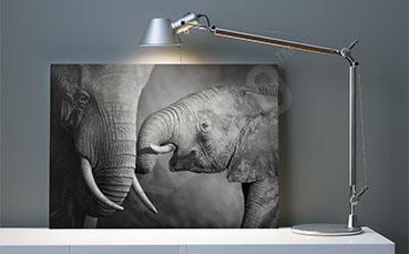 Obraz zwierzęta czarno-białe