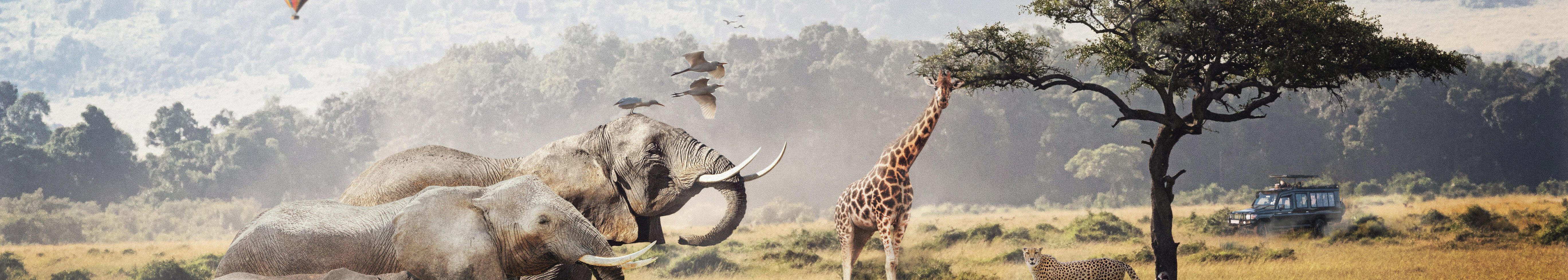 Obraz zwierzęta w Afryce