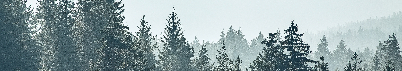 Panoramiczna naklejka las