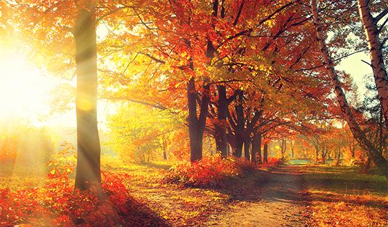 Parki i drzewa