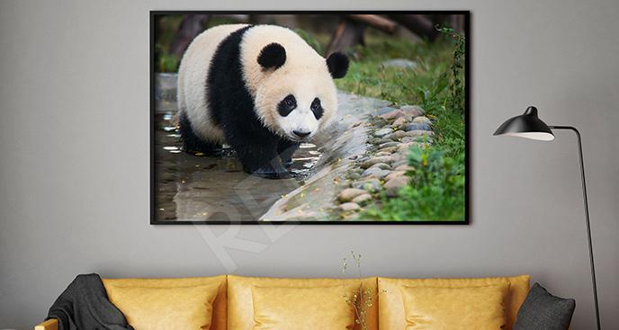 Plakat biało-czarny niedźwiedź