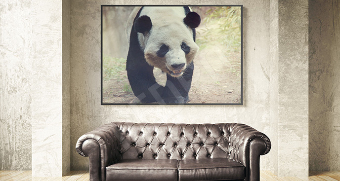 Plakat do salonu panda