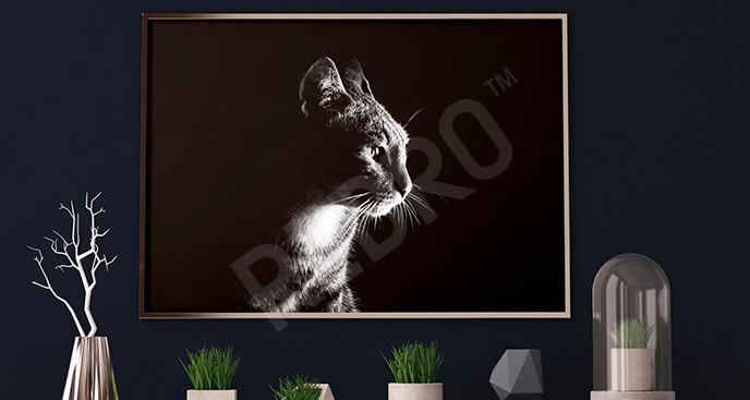 Plakat fotografia kota