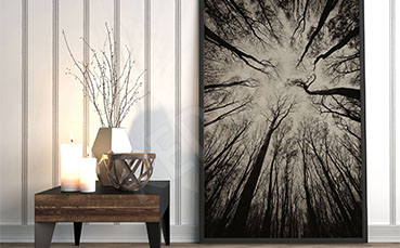 Plakat korony drzew