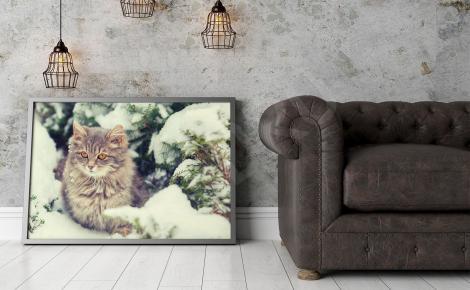 Plakat kotek w śniegu