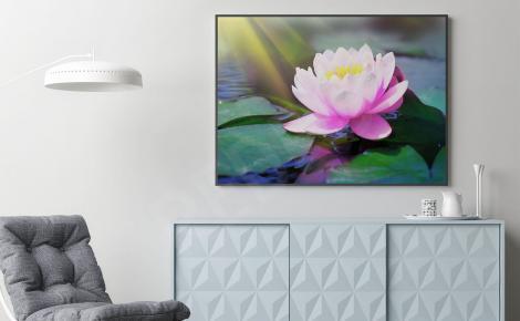 Plakat kwiat lilii wodnej