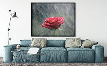 Plakat kwiat róży