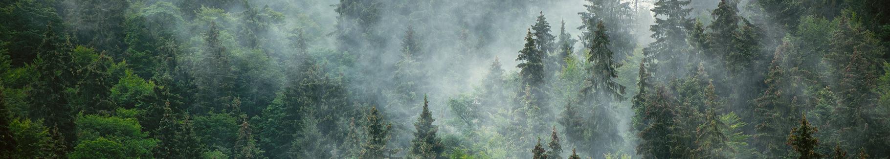 Plakat las liściasty