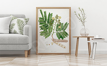 Plakat liście paproci do salonu