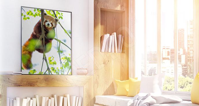 Plakat mała panda na drzewie