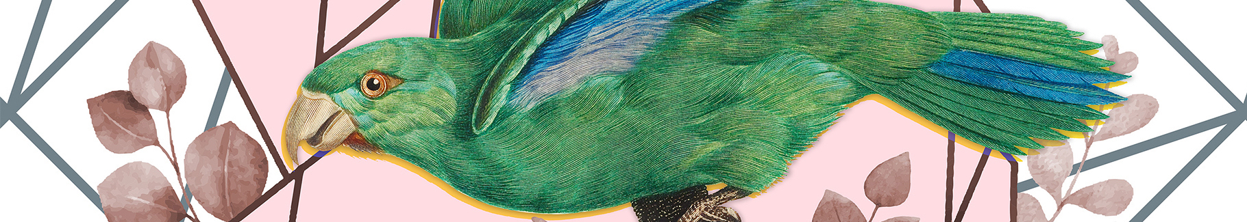 Plakat Marigold Parakeet na geometrycznym tle