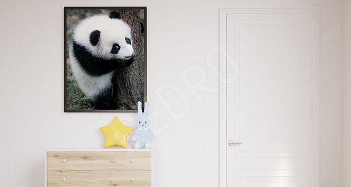 Plakat niedźwiedź bambusowy