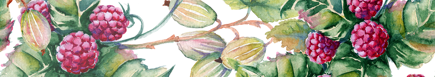Plakat owoce - maliny i agrest