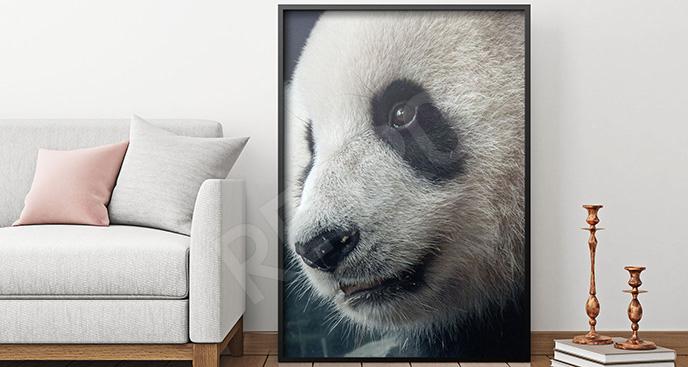 Plakat panda makrofotografia