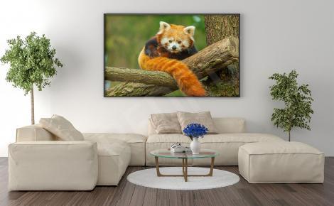 Plakat panda mała