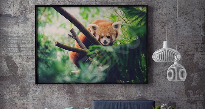 Plakat panda mała do salonu