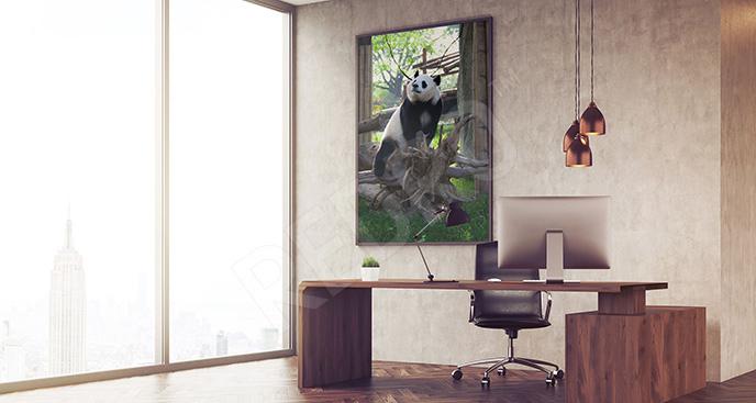 Plakat panda wielka