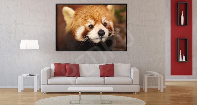 Plakat pandka ruda