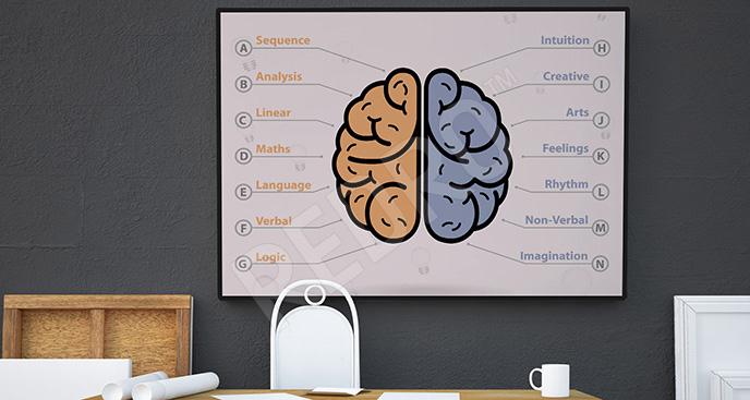 Plakat półkule mózgowe