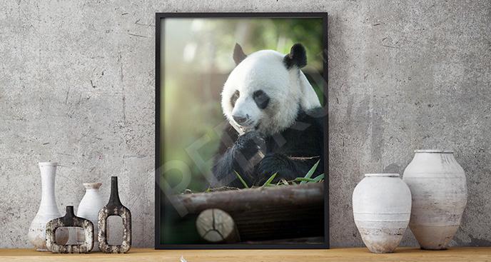 Plakat portret niedźwiedzia