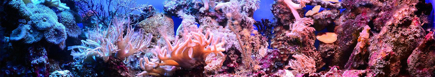 Plakat rafa koralowa i ryby